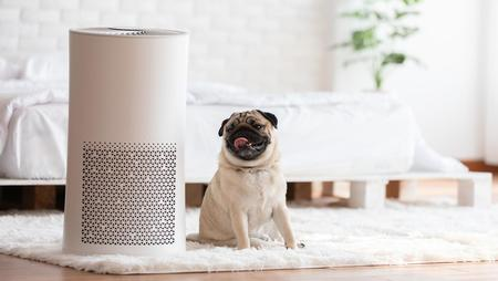 Which kind of air air purifier is best for you?