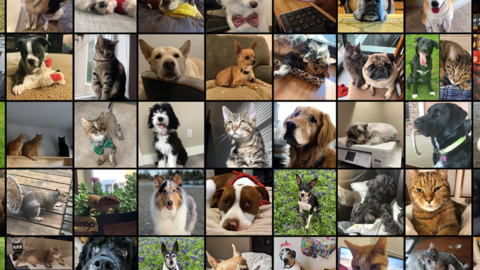 Halo Developer 343 Industries Shares Photographs Of Their Pets, And They Are So Cute
