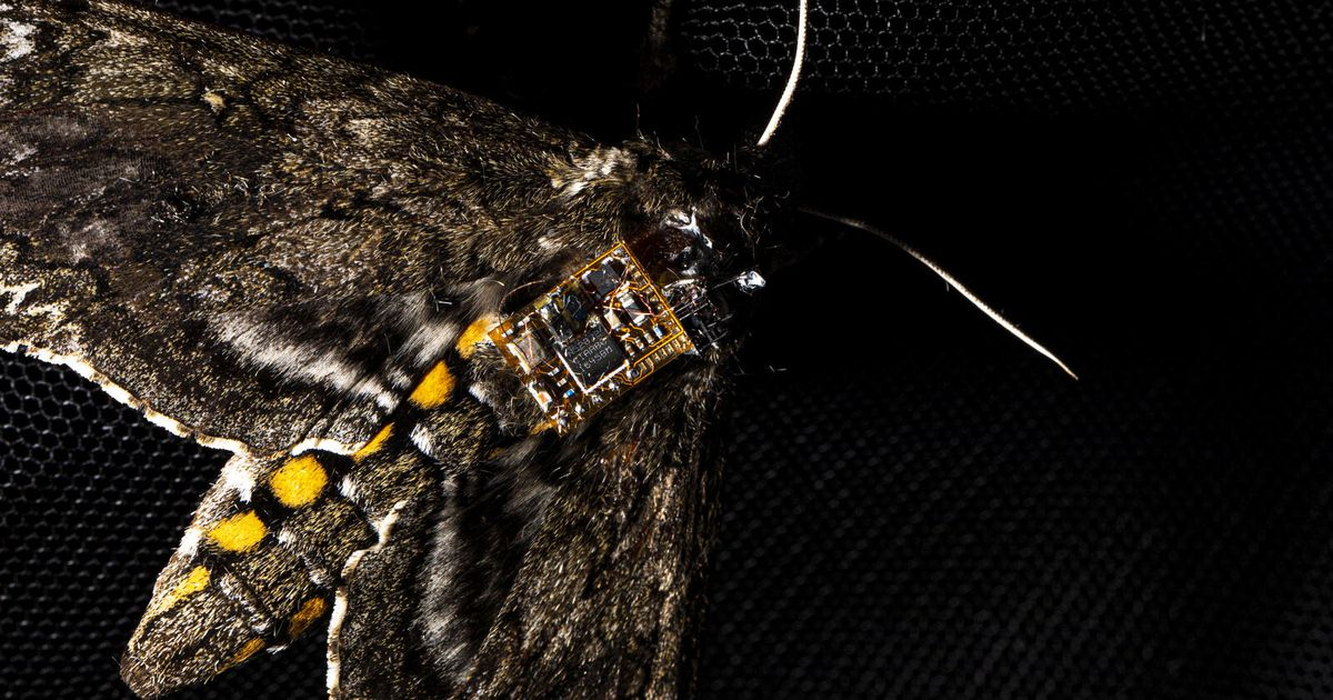 Moths as drones: Researchers harness bugs to airdrop environmental sensors