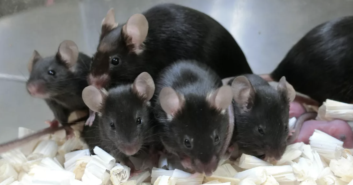 After almost six years on the space station, frozen mouse sperm produces healthy pups